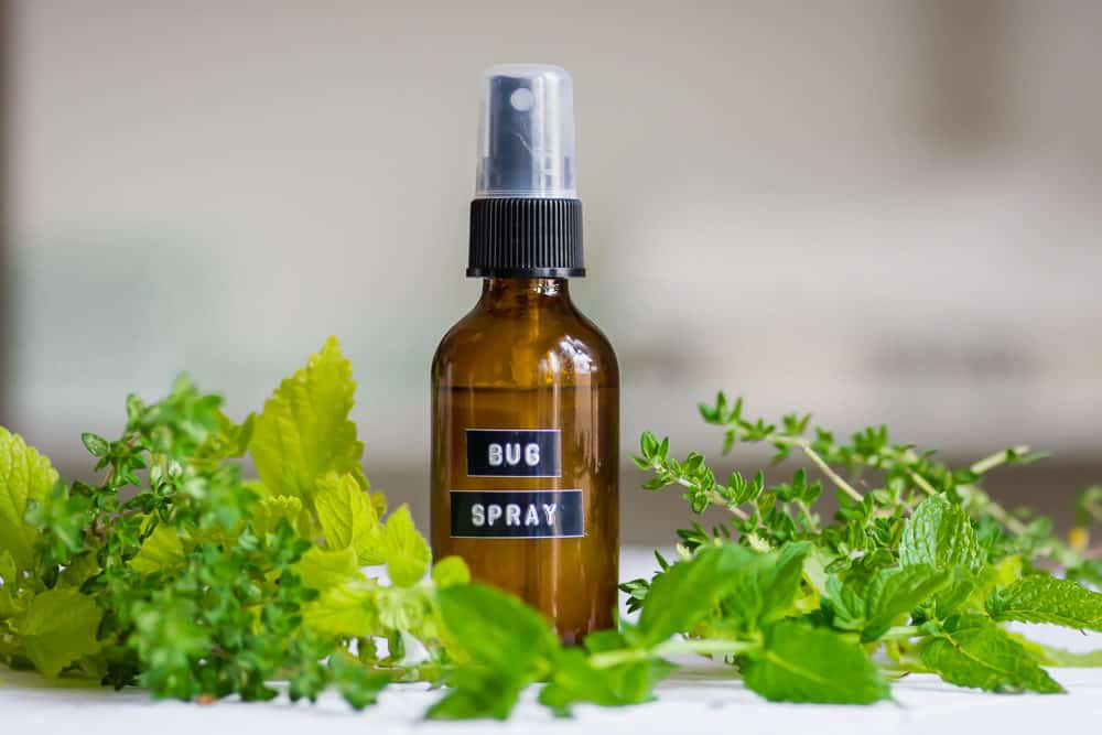 Pull back shot of homemade bug spray bottle with green herb leaves